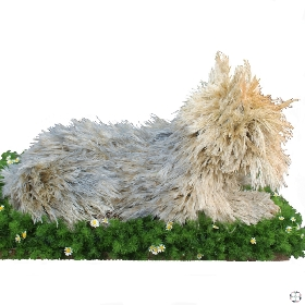 Dog Funeral Tribute Yorkshire Terrier